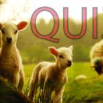 Dyrequiz – 17 Spørsmål og Svar
